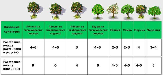 Расстояние при высадке растений на огороде