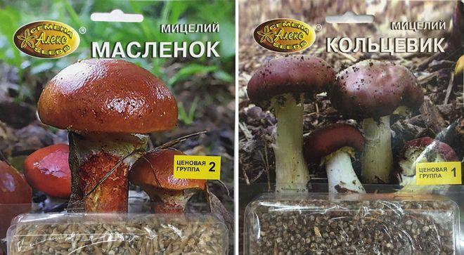 Мицелий грибов для выращивания