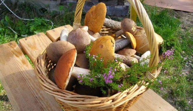 Урожай грибов в корзинке