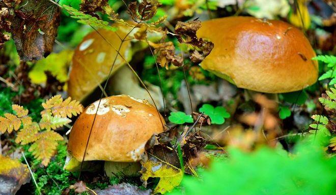Грибы под листьями