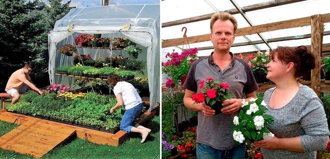 Семейный бизнес на продаже рассады цветов