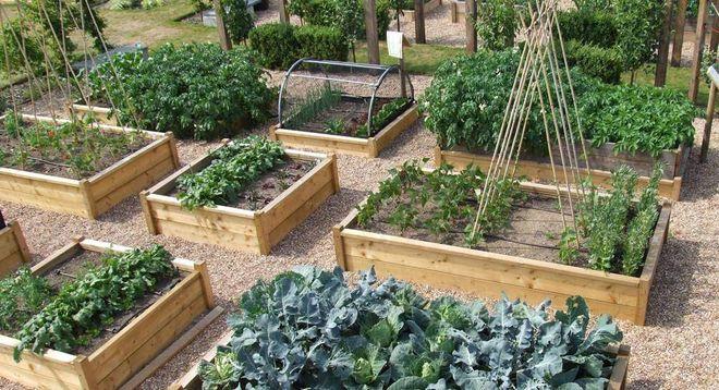 Высокие грядки для овощей и зелени