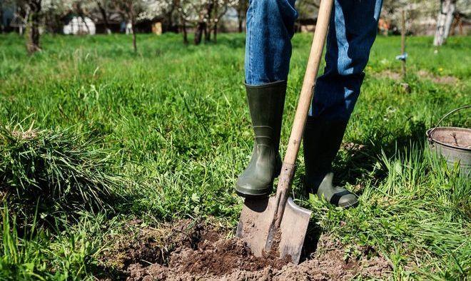 Мужчина вскапывает огород