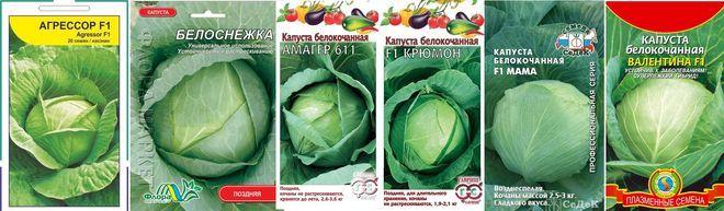 Лучшие сорта белокочанной капусты