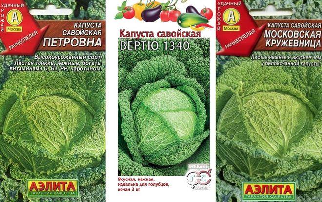 Популярные сорта савойской капусты