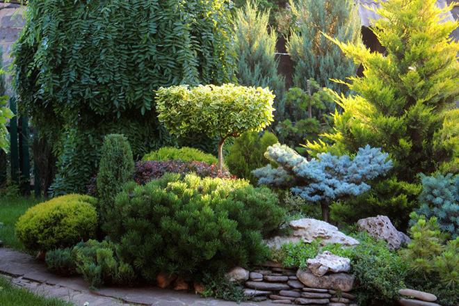 11 растений для идеального ландшафтного дизайна
