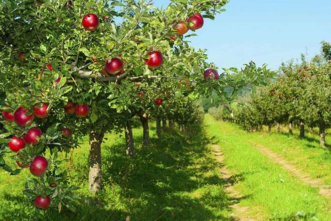 7 деревьев, которые должны быть в каждом саду