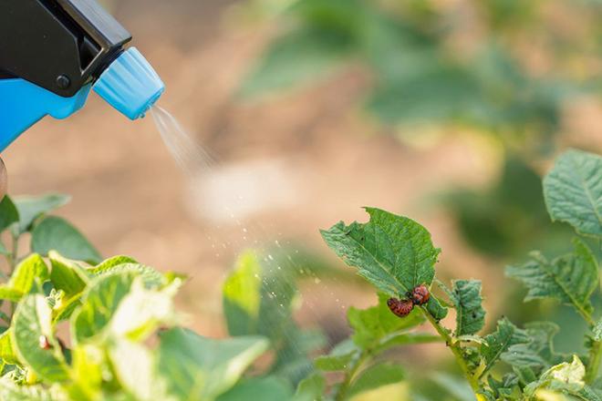 Биологические инсектициды от колорадского жука