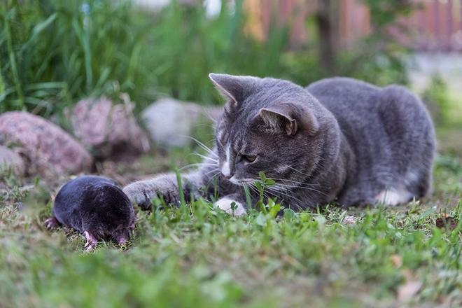 Кот и кроты