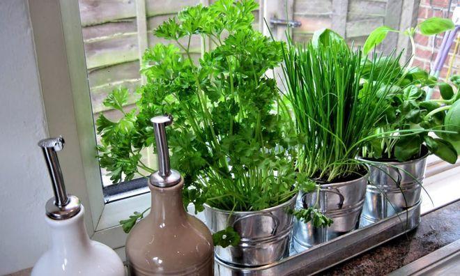 Зелень дома на кухне