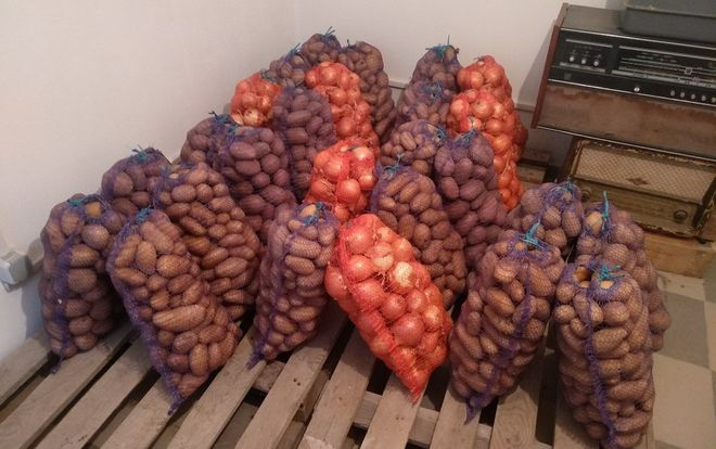 Хранение картошки в погребе