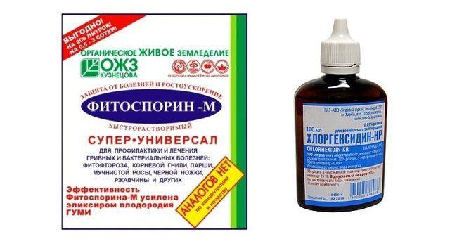Фитоспорин и Хлоргексидин