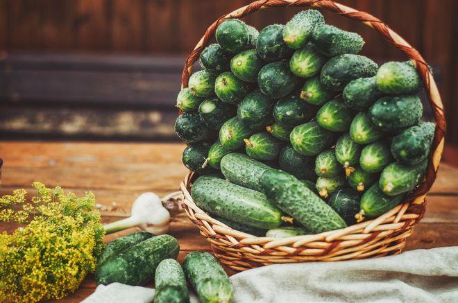 Урожай огурцов в корзине
