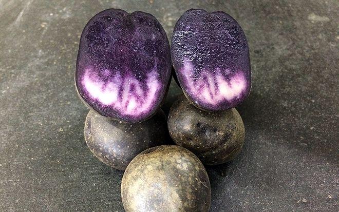 """Картофель """"Солоха"""""""