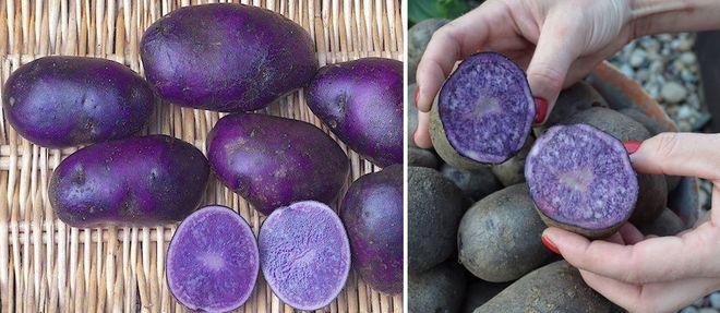 """Картофель """"Фиолетовый"""""""