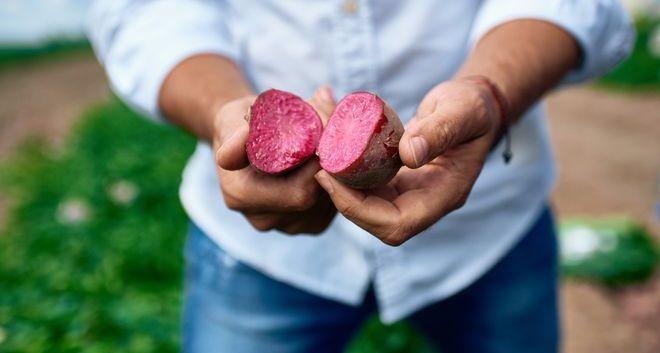 Картофель с фиолетовой мякотью