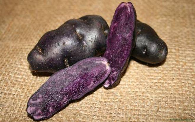 Картофель с фиолетовой мякотью Перуанский (Purple Peruvian)