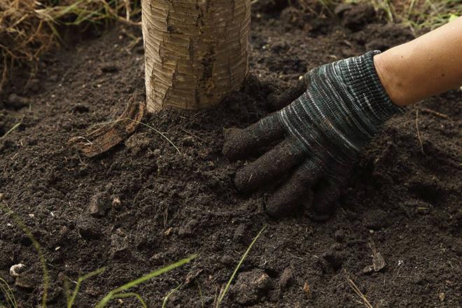 Рыхление почвы вокруг деревьев