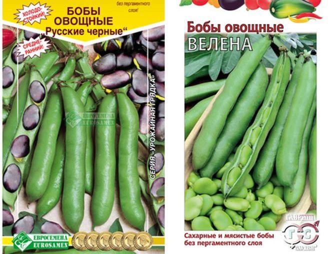 Урожайные сорта бобов