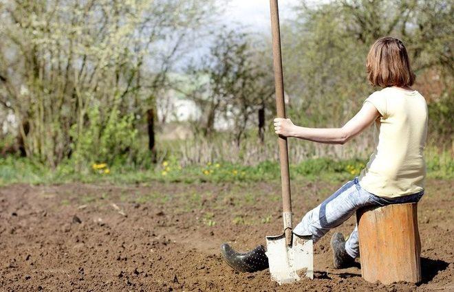 Перекапывание участка лопатой