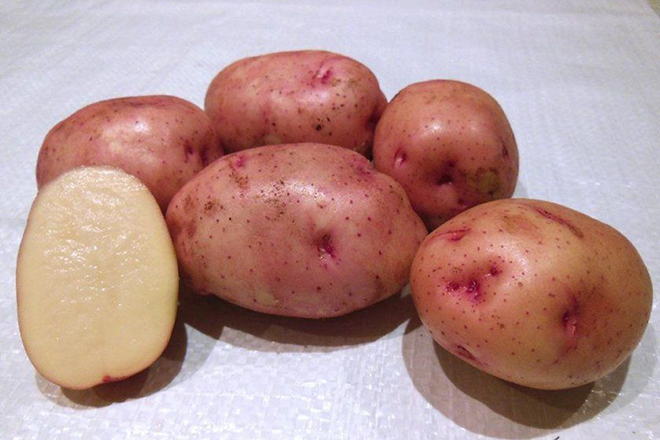 """Картофель """"Снегирь"""""""