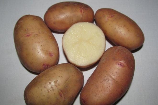 """Картофель """"Тирас"""""""