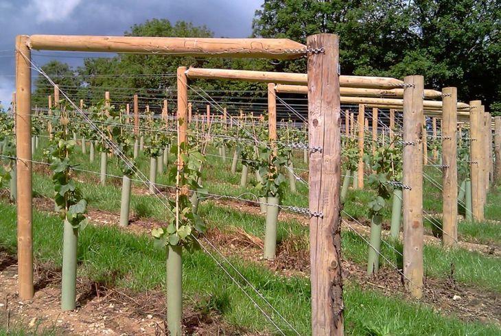 Одноплоскостные опоры для винограда