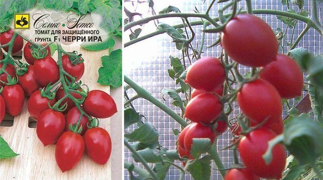 Сорт томатов Черри Ира