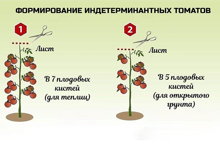 Пасынкование индетерминантных сортов томатов