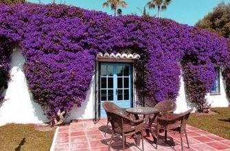 Дача в фиолетовом стиле