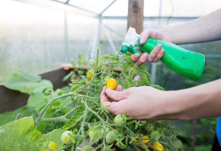 Марганцовка против грибка на растениях