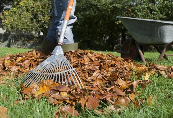 Очистка сада от листьев