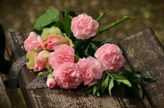 Разведение роз из черенка