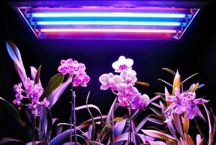 Люминисцентные лампы для орхидеи