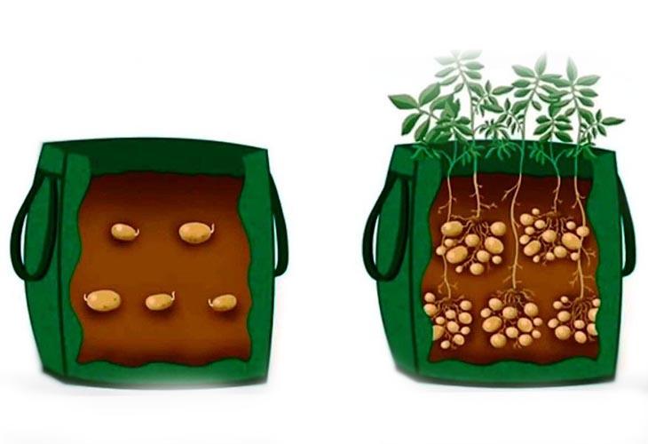 2-ярусное выращивание картофеля в мешках