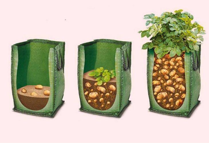 1-ярусное выращивание картофеля в мешках