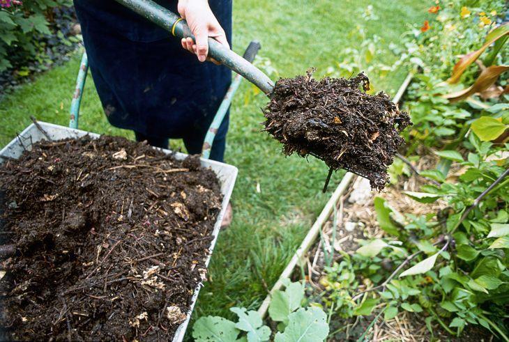 Мульчирование малины компостом