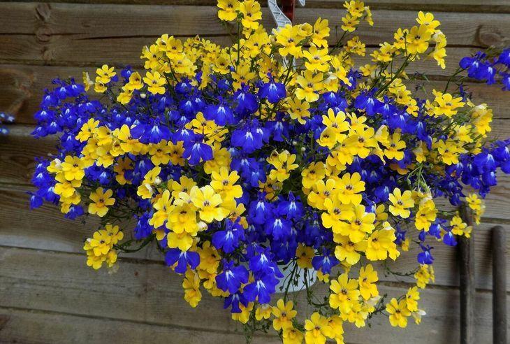 Цветы ампельные в кашпо