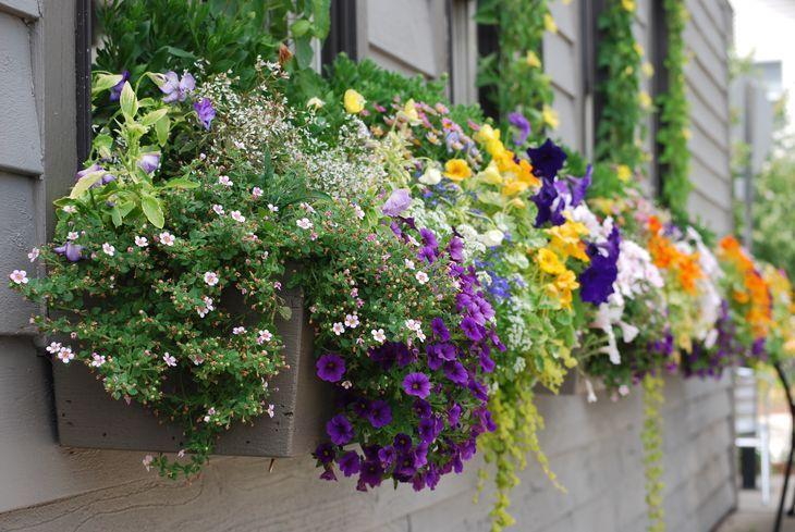 Каскадные цветы в кашпо