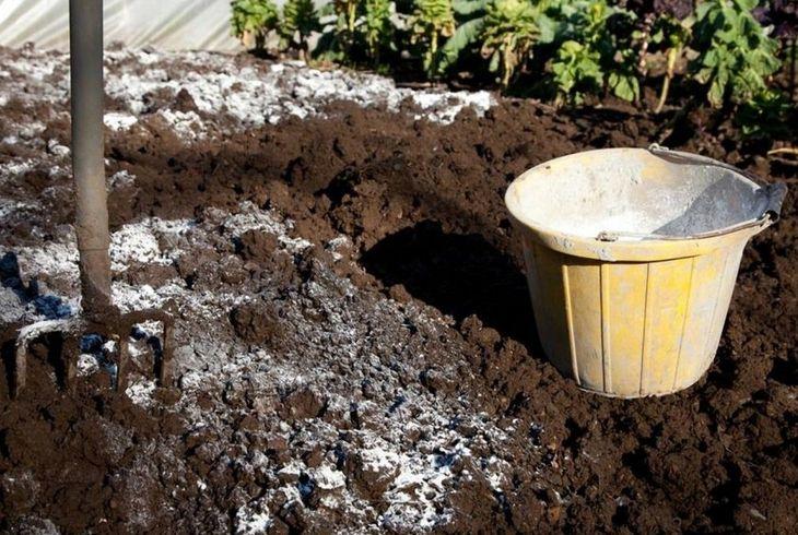 Известкование почвы для раскисления