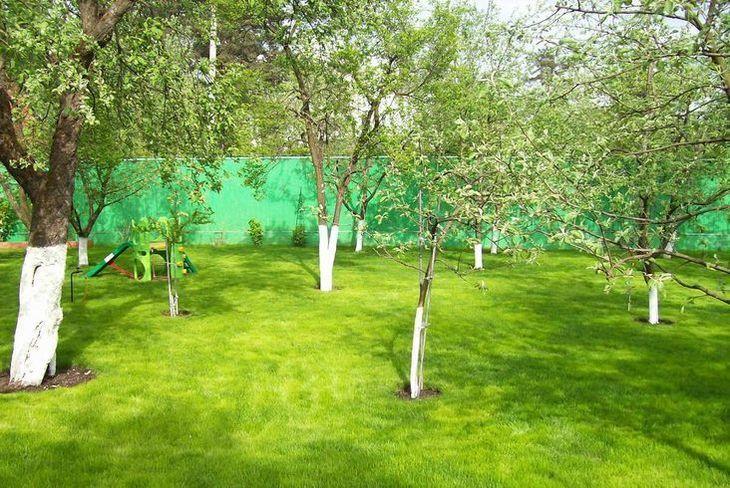 Молодой сад