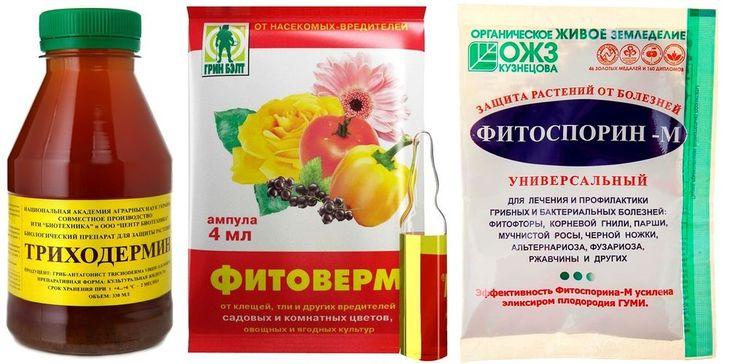 Препараты для опрыскивания кустов смородины