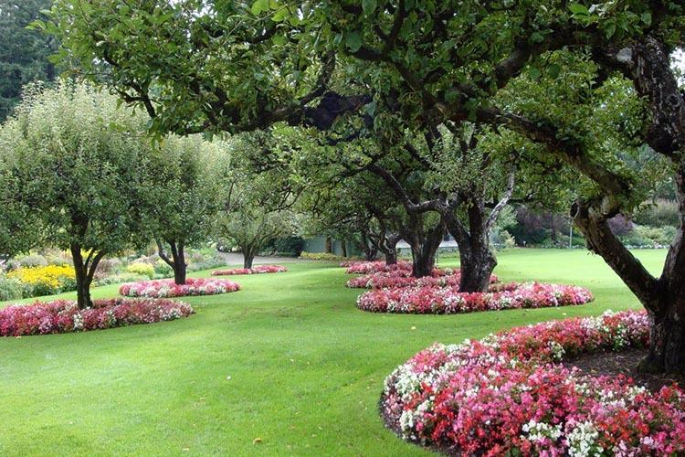 Деревья в саду