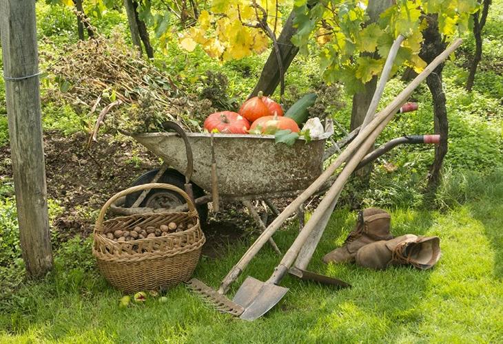 Работа в осеннем саду