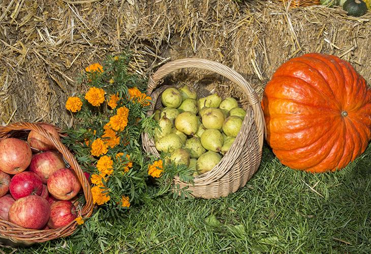 Уборка урожая осенью