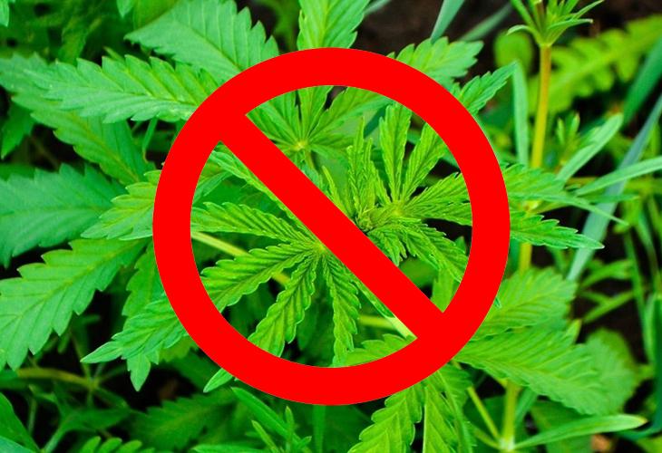 Запрещенные растения