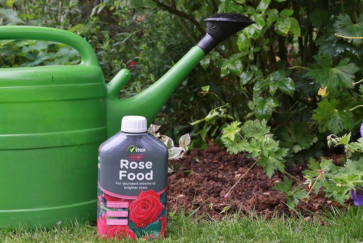 Удобрение для розы