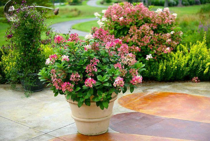 Дачные цветы в кашпо