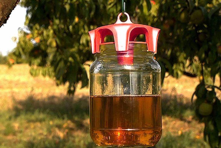 Приманка для ос на дереве