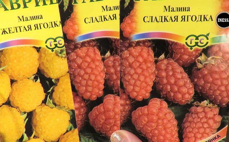 Семена малины